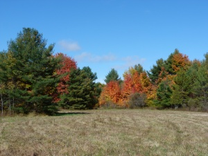 "Our ""back yard"", autumn 2012"