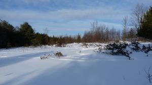 Deer trails and juniper bushes