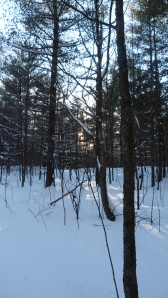 The light through the cedar grove