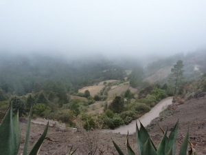 the Sierra Juárez cloud forest