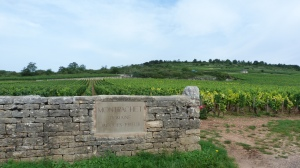 The vineyards of Cote D'Or
